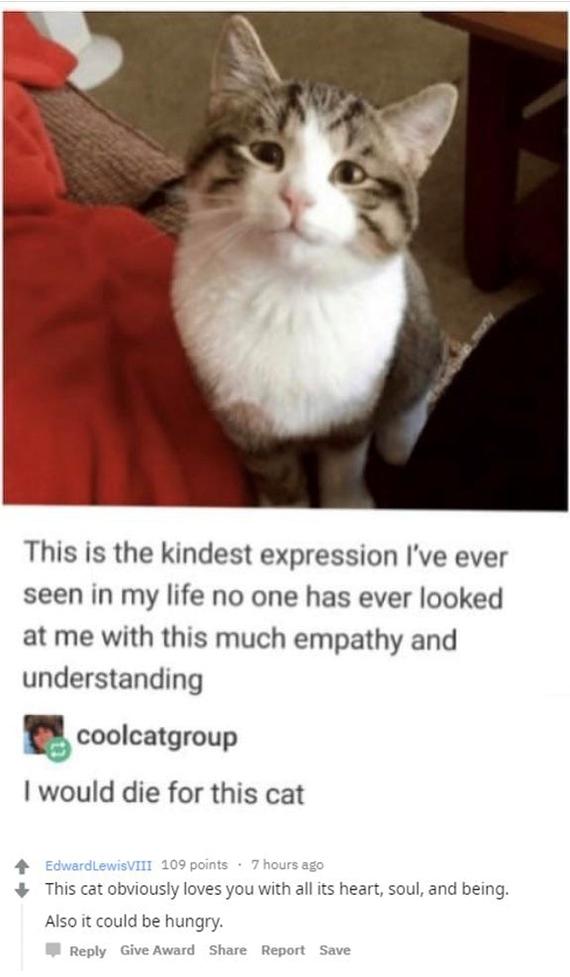 Такая милая моська! Милота, Кот, Котомафия, Хитрость, Комментарии, Reddit, Животные, Домашние животные