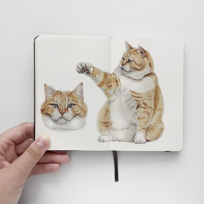Рыжий кот цветными карандашами Кот, Процесс, Рисунок, Портреты животных, Видео, Анималистика, Животные, Процесс рисования, Цветные карандаши
