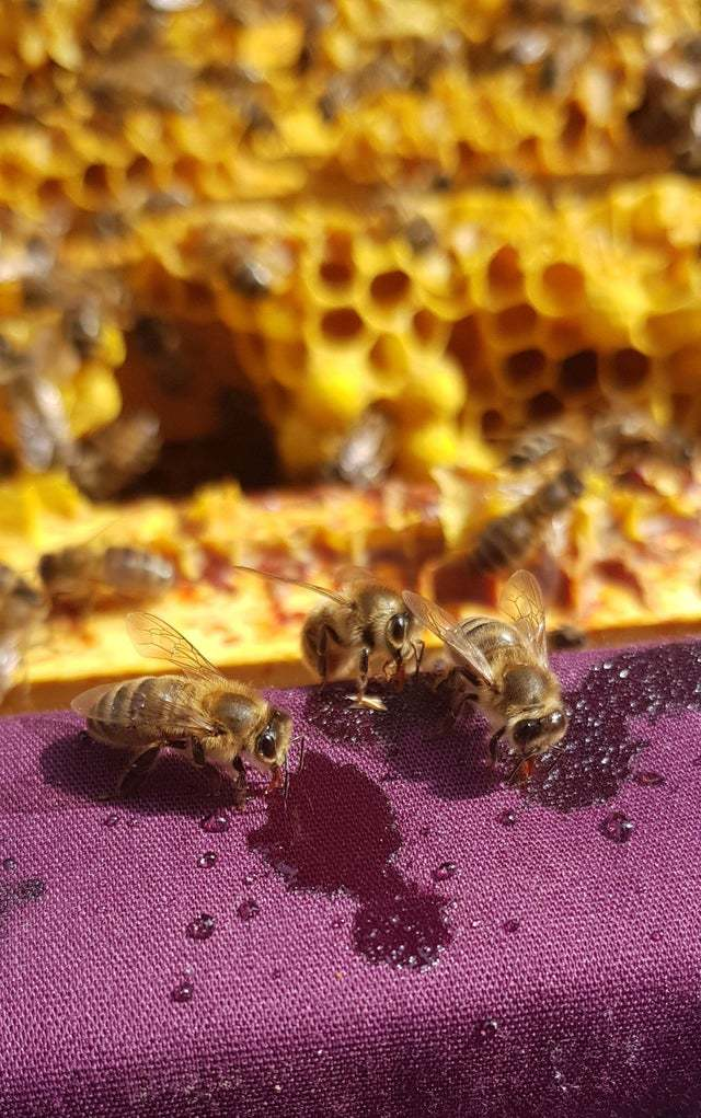 Милые пчелы Пчелы, Пчеловодство