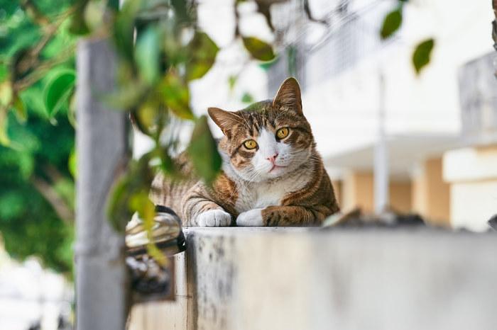Городские коты Израиля Кот, Израиль, Животные, Братья наши меньшие, Домашние животные, Фотография, Дворняга, Милые фото, Длиннопост