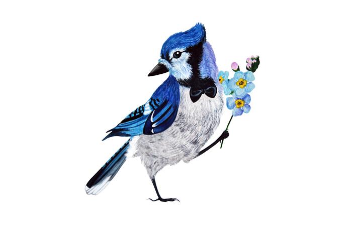 Джентельменский птиц Рисунок, Акварель, Сойка, Незабудки, Цветы, Птицы, Джентльмен, Анималистика
