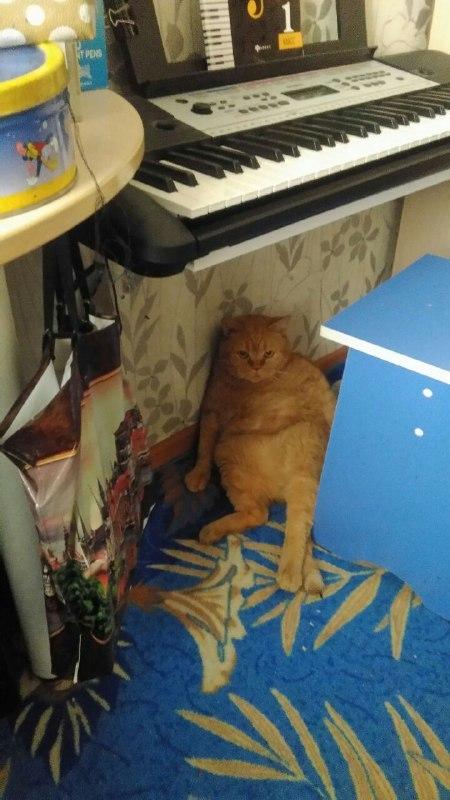 Говорят тут на Пикабу любят котиков Кот, Рыжий, Британцы, История, Животные, Длиннопост
