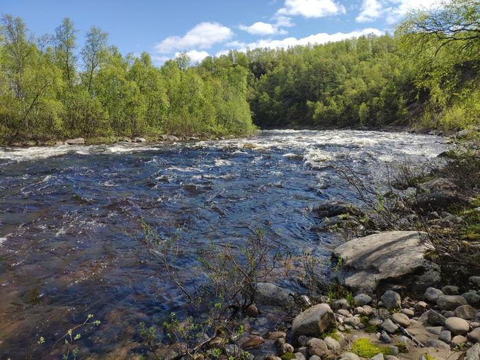 Река Ура, Мурманская область Ура, Мурманская область, Семга, Рыбалка, Опять без рыбы, Длиннопост