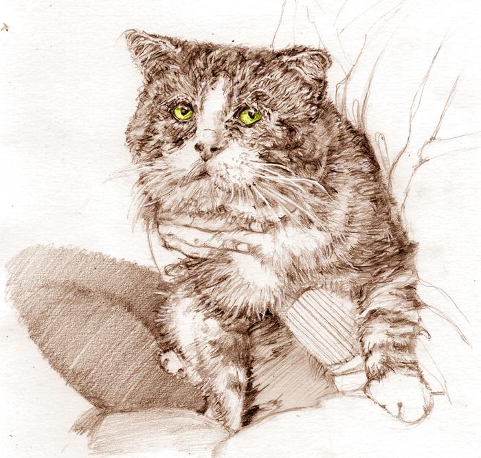 Рисунок, кот Паду