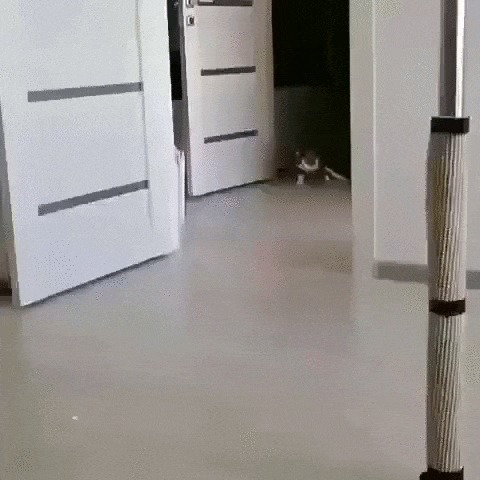 Котик-инвалид играет с лазерной указкой Кот, Котомафия, Домашние животные, Инвалид, Лазерная Указка, Игры, Гифка