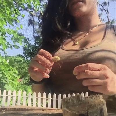 Бурундук и орешки