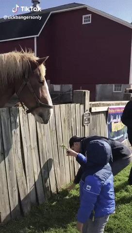 Покатай меня, лошадка!