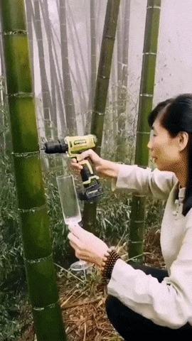 Самое главное в джунглях...