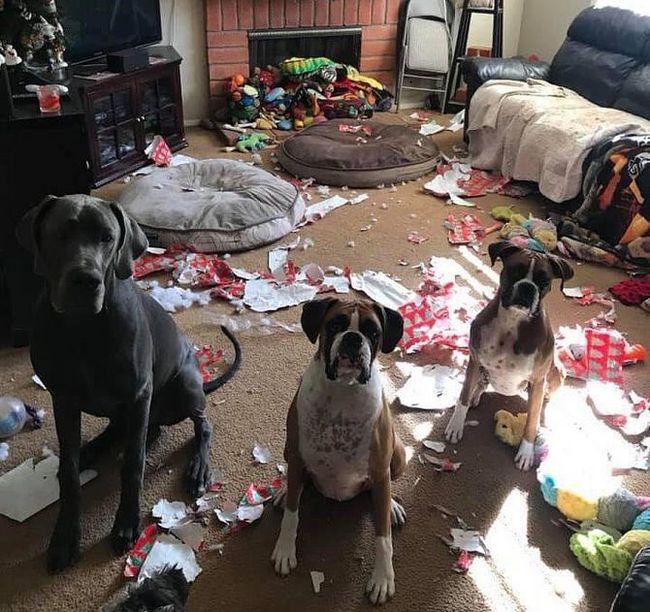 Приходили грабители, но мы их выгнали, не благодари!