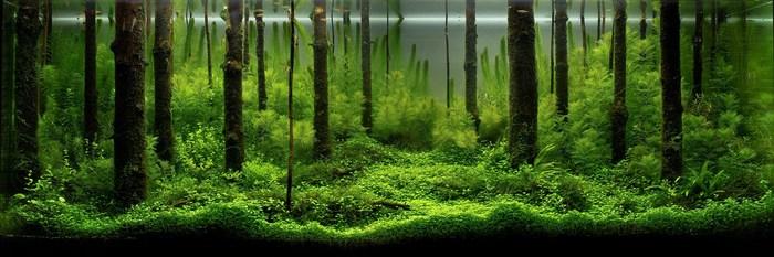 """Оформление небольших аквариумов. Один из лучших - стиль """"Форест"""" Аквариум, Аквариумистика"""