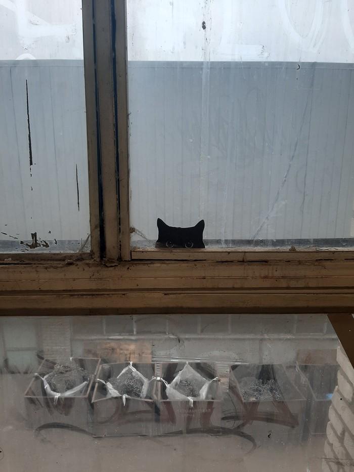 Опачки, глазки! Кот, Окно, Наклейка, Радость