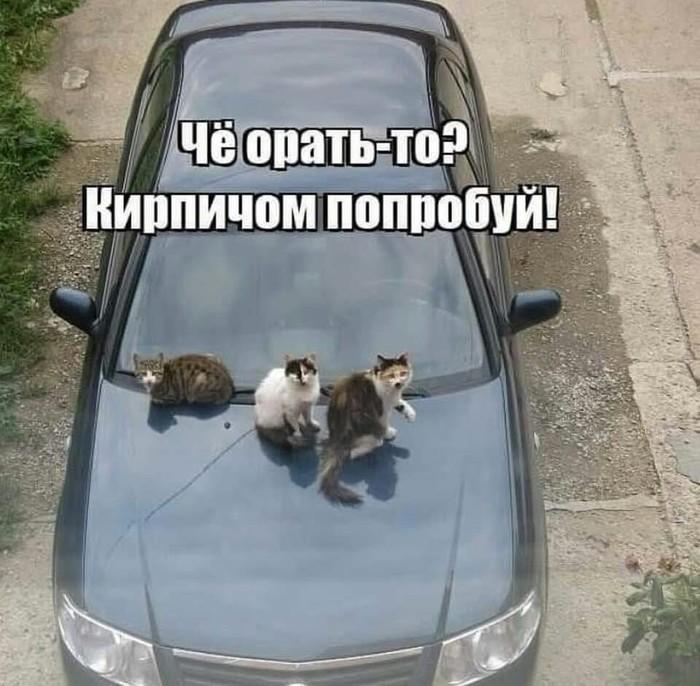 Новый вариант. Кот, Машина