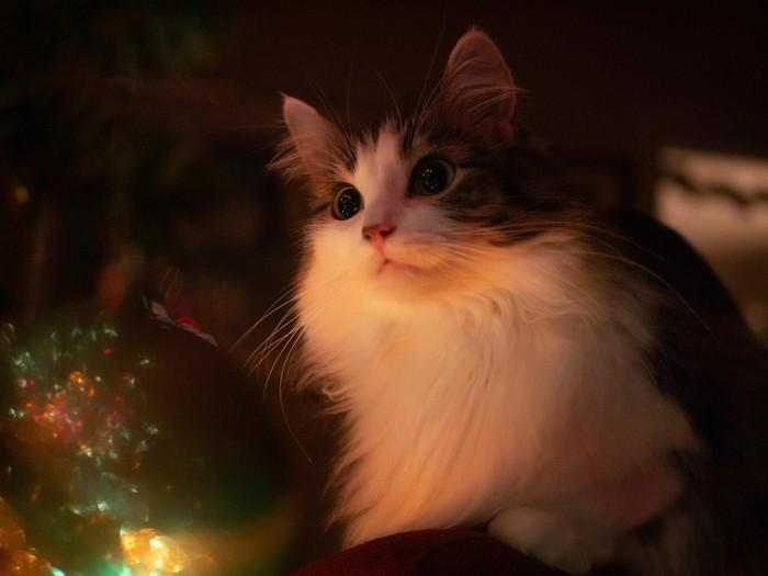 Главное новогоднее украшение!)