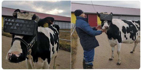 Коровы и VR-очки Альфа Комиксы, Корова, Виртуальная реальность, Новости, Ферма, Очки виртуальной реальности, Эксперимент, Рисунок