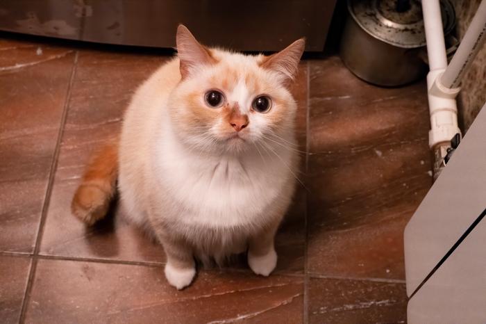 Кот Кот, Котомафия, Fujifilm