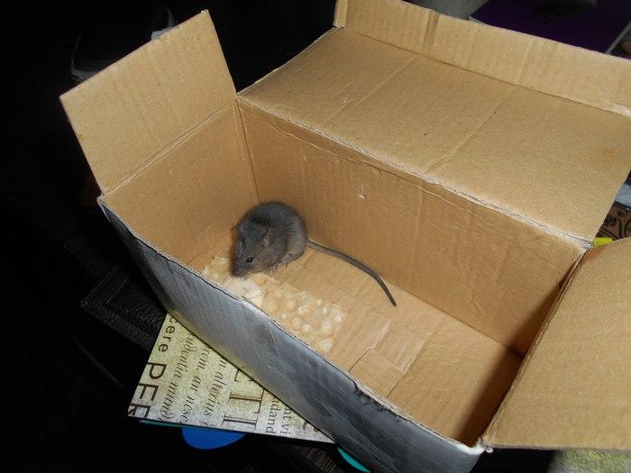 Мышка Мышь, Милота, Реальная история из жизни