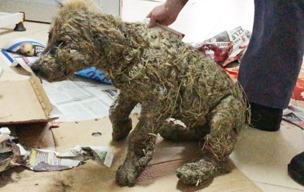 История щенка которого облили дети клеем Собака, Клей, Дети, Издевательство, Негатив, Видео, Длиннопост