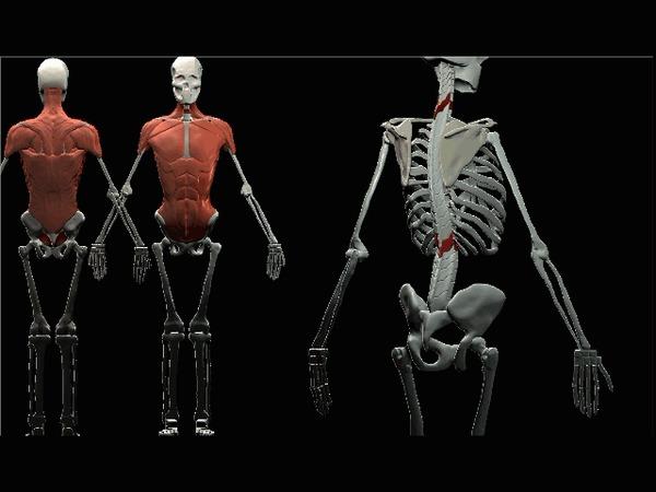 Учусь Zbrush - 01 Zbrush, Обучение, Анатомия, Рисование, Скульптура, Компьютерная графика, 3D графика, Видео, Гифка, Длиннопост