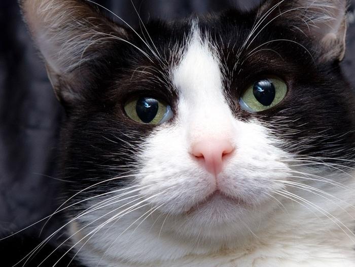 Почему судьба так жестока к Луисе? Приют муркоша, Приют для животных, Кот, В добрые руки, Москва, Помощь, Без рейтинга, Длиннопост