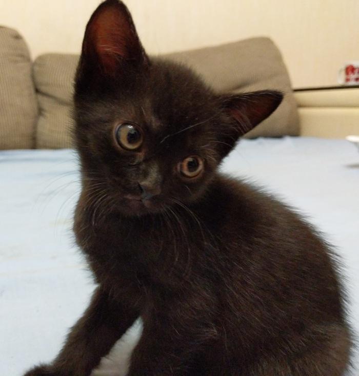 Три котёнка (1 месяц) в добрые руки! Кот, В добрые руки, Химки, Котята, Длиннопост