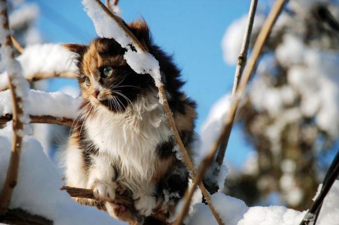 Зимняя птичка...
