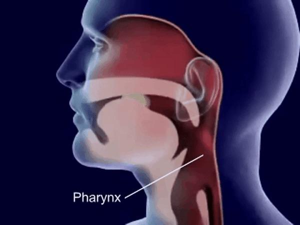 Как происходит глотание Глотание, Медицина, Анатомия, Процесс, Интересное, Познавательно, Гифка, Хочу всё знать!!!