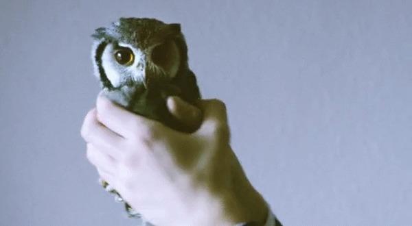 Зачем птицам нужна стабилизация? Птицы, Голова, Глаза, Стабилизация, В мире животных, Интересное, Познавательно, Гифка, Длиннопост