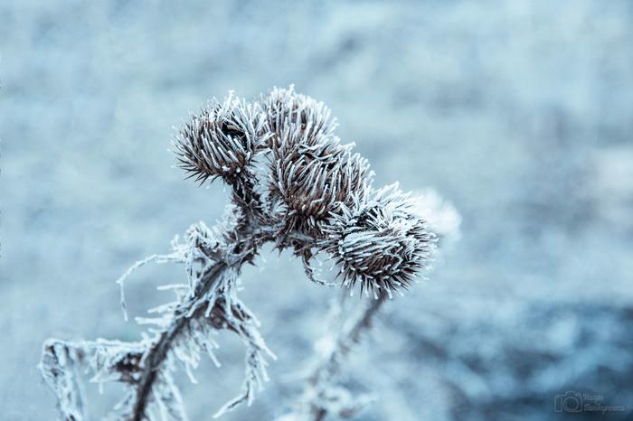 Морозное туманное утро