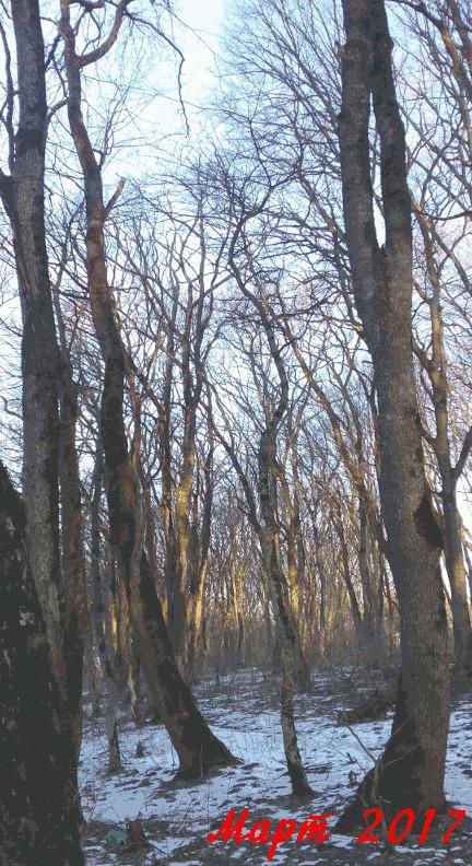 Год в лесу за 20 секунд Лес, Погода, Съемки, Ставрополь, Гифка