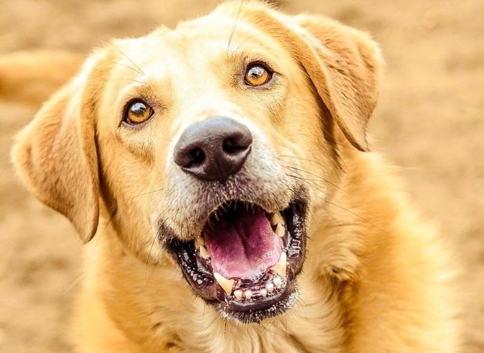 Дымок - большой пёс с огромным любящим сердцем Приют для животных, В добрые руки, Собака, Помощь, Москва, Без рейтинга, Длиннопост