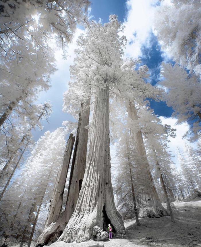 Инфракрасный снимок сделанный в национальном парке Секвойя