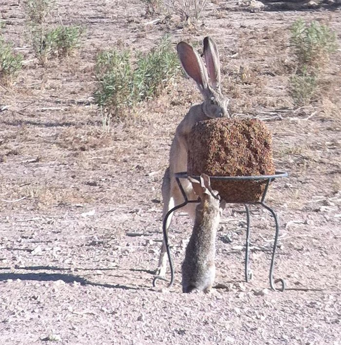 Кролик это 12 зайца)