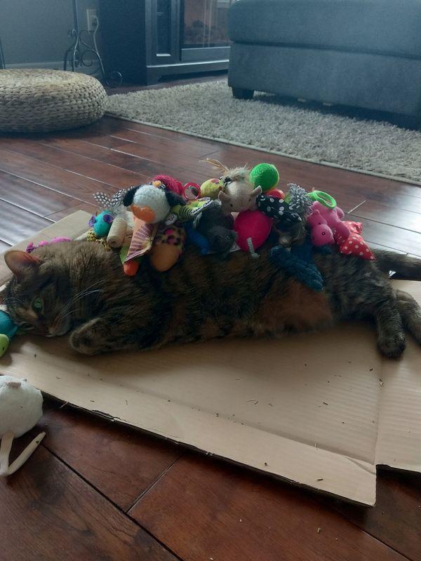 Все игрушки мира не исправят того, что коробочка поломалась...