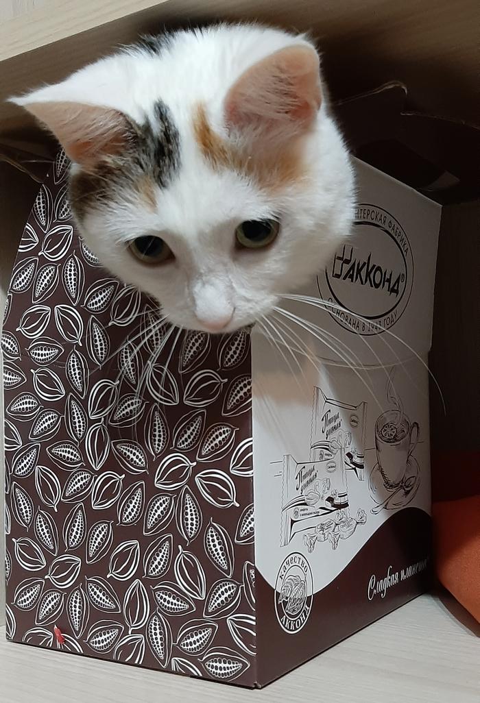Лучший подарок, по-моему, кот!