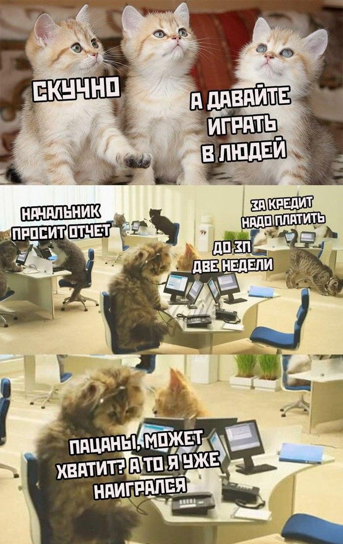 Коты в самоизоляции