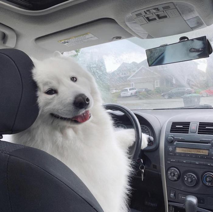А сфоткай, типа, я таксист!
