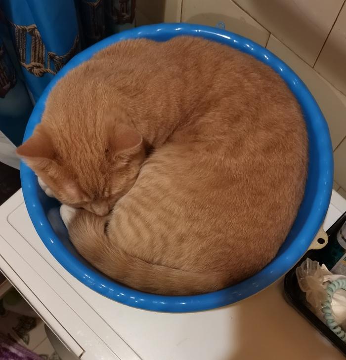 Число пи это отношение длины кота к его диаметру