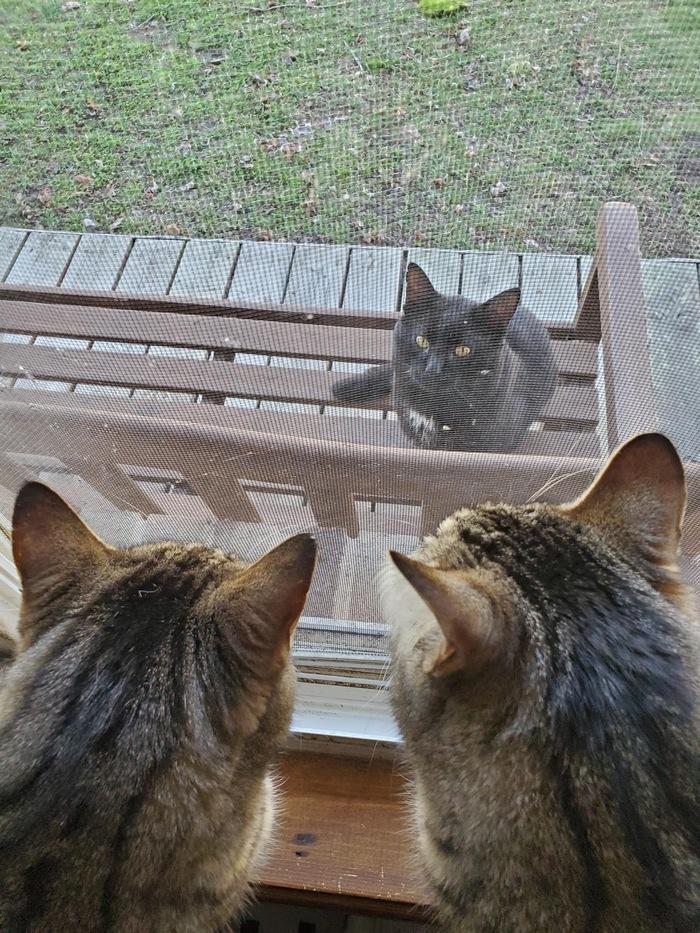 Коты соблюдают дистанцию