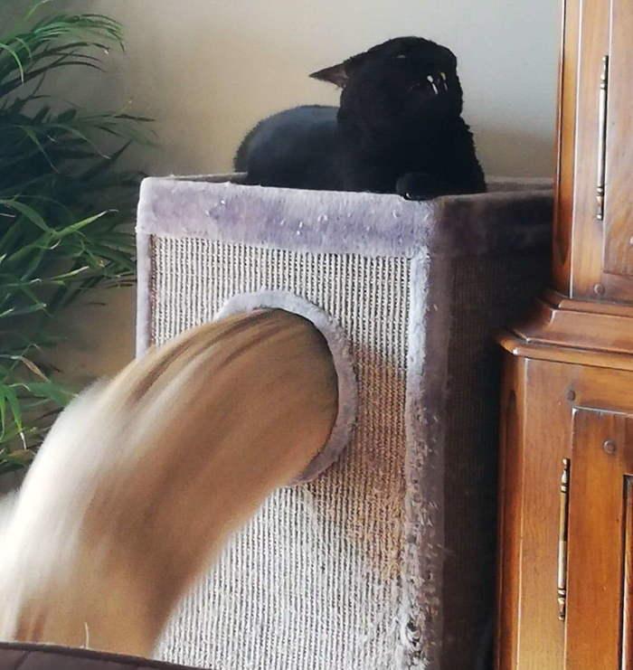 Котик вытекает