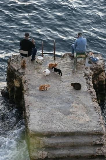 Просто котики ждут рыбу