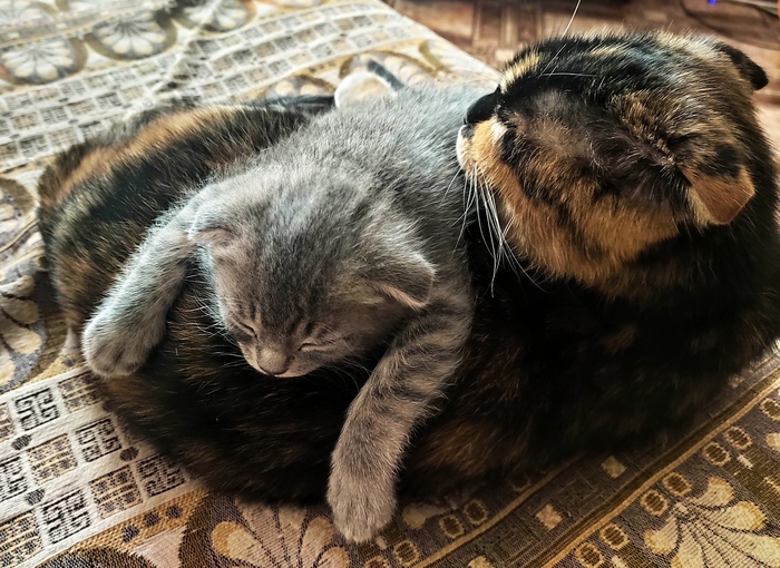 Моя котомафия спит
