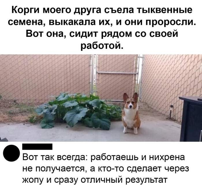 https://cs12.pikabu.ru/post_img/2020/05/23/0/1590181945119246956.jpg