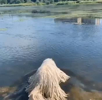 Редкий вид водяного монстра-швабры