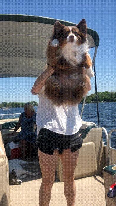 """Эта собака слишком прямо поняла фразу """"плавать на лодке"""""""