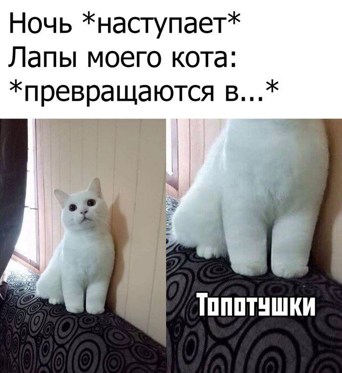Топотун