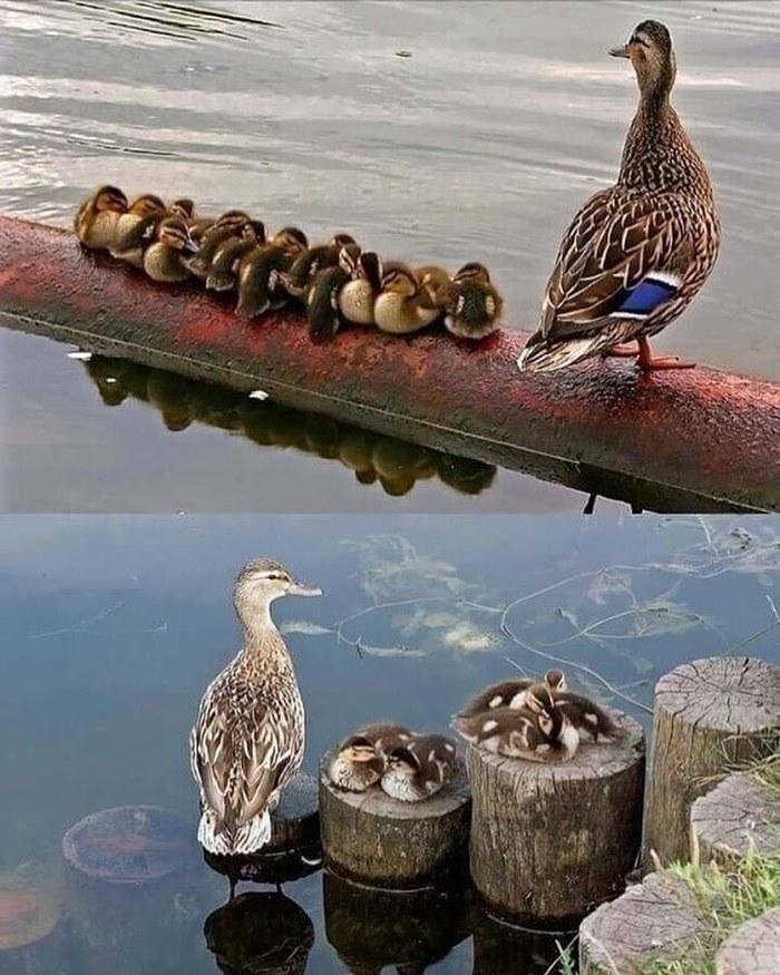 Встреча на рыбалке