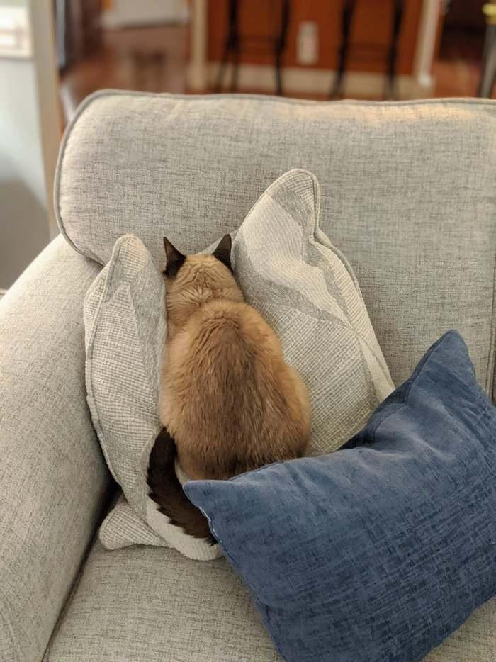 """""""Я согнал кота со своего ноутбука. Кажется, он обиделся на меня из-за этого"""""""