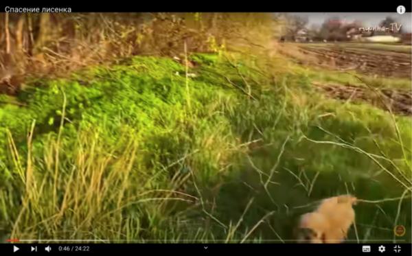 Живодерство на YouTube-канале «Афина-ТВ» Животные, Кот, Котята, Негатив, Длиннопост, Помощь, Защита животных, Лиса, Лисята