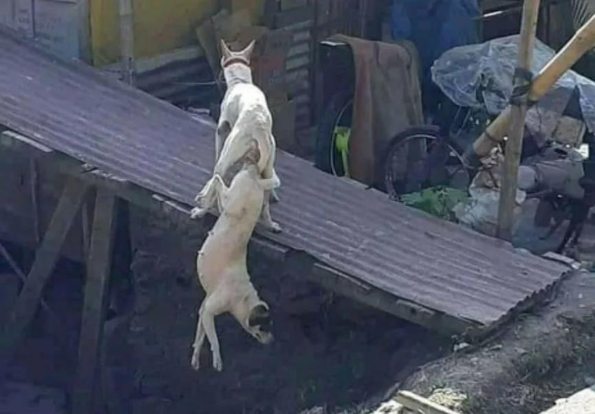 Пожалуйста Секс С Собаками