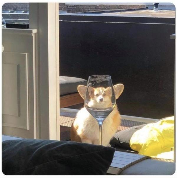 Бокал наполовину пёс